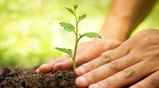 Bispos convidam brasileiros a plantarem uma árvore no dia de finados